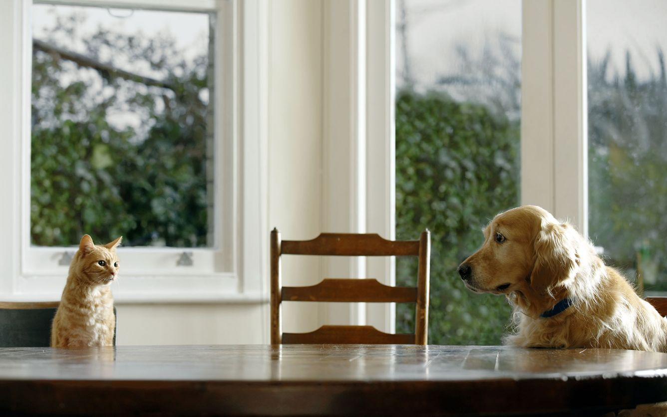 how to get rid of pet urine odor in carpet