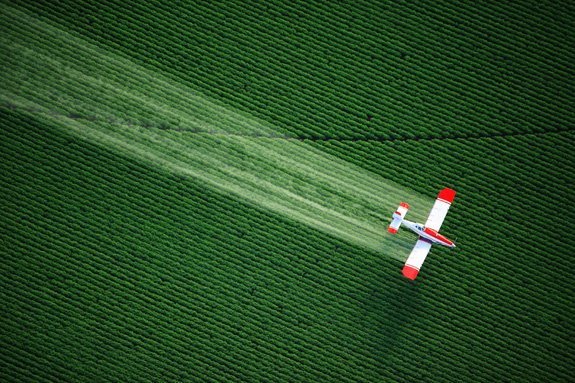 A new study is linking the pesticides chlorpyrifos and DDT and other chemicals to a rise in cases of neurodevelopmental disabilities. (Shutterstock)