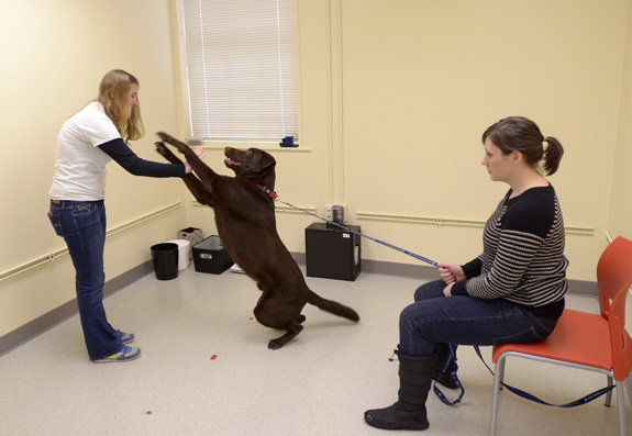 Porter the dog wants a treat during his session at the Canine Cognition Center at Yale with Angie Johnston, left, and his owner, Kristi Leimgruber. Studying dogs could provide insight into autism and other conditions, researchers say. (Patrick Raycraft/Hartford Courant/MCT)