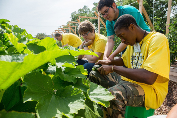 Deyuan Hill, right, works with Justin Gutierrez, center, to harvest vegetables at Growing Solutions Farm in Chicago. (Zbigniew Bzdak/Chicago Tribune/MCT)